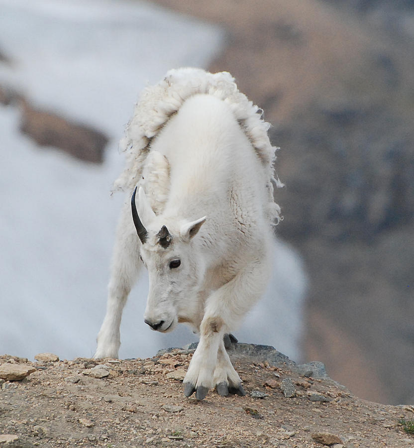 Wyoming Photograph - Wyoming Native by Beth Sullivan