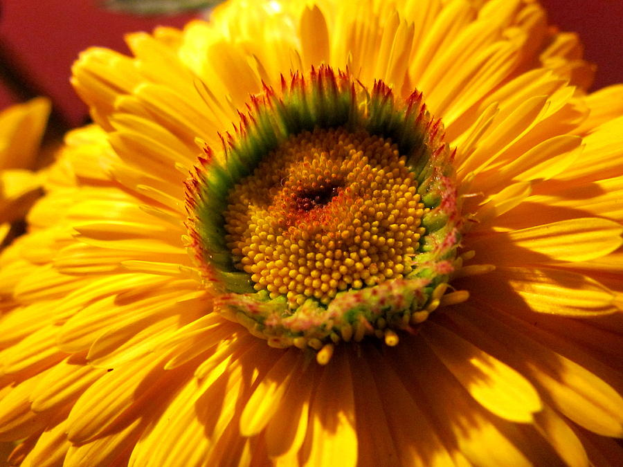 Flower Photograph - Yellow Flower by Joyce Woodhouse