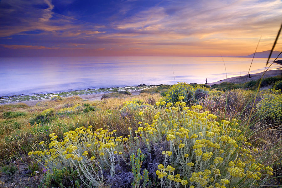 Seascape Photograph - Yellow Flowers At The Sea by Guido Montanes Castillo