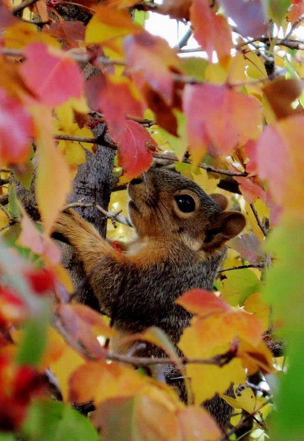 Squirrels Pyrography - You Got Me... by Cristina Mihailescu
