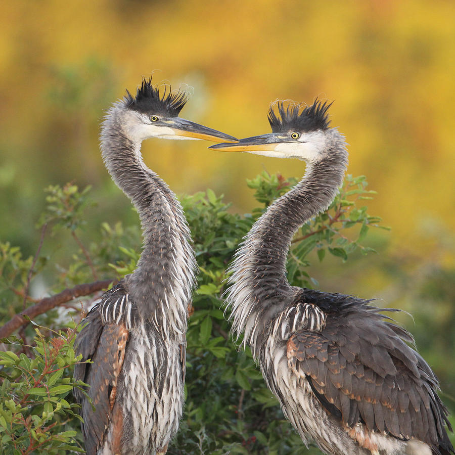 Great Photograph - Young Herons by Brian Magnier