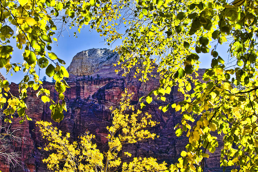 Zion National Park Utah Photograph - Zion National Park by Jon Berghoff