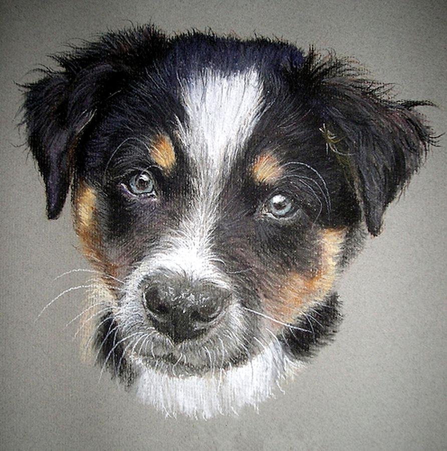 Border Collie Dog Portrait Pastel by Olde Time  Mercantile