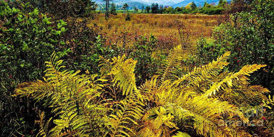 Monongahela National Forest Photograph - Cranberry Glades Botanical Area by Thomas R Fletcher