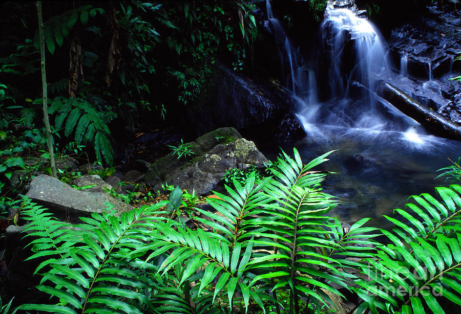 Puerto Rico Photograph - El Yunque National Forest by Thomas R Fletcher