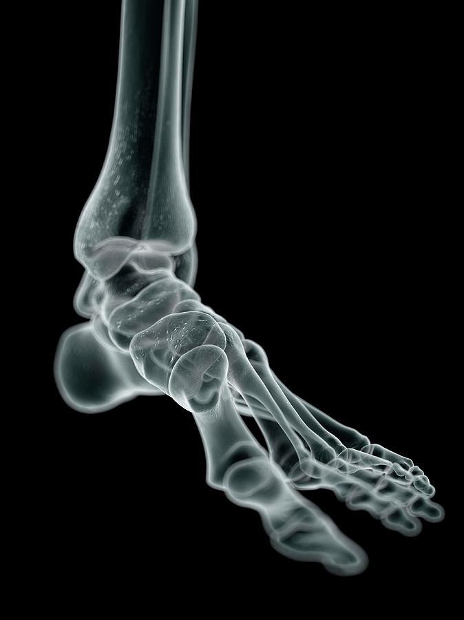 Artwork Photograph - Human Foot Bones by Sciepro