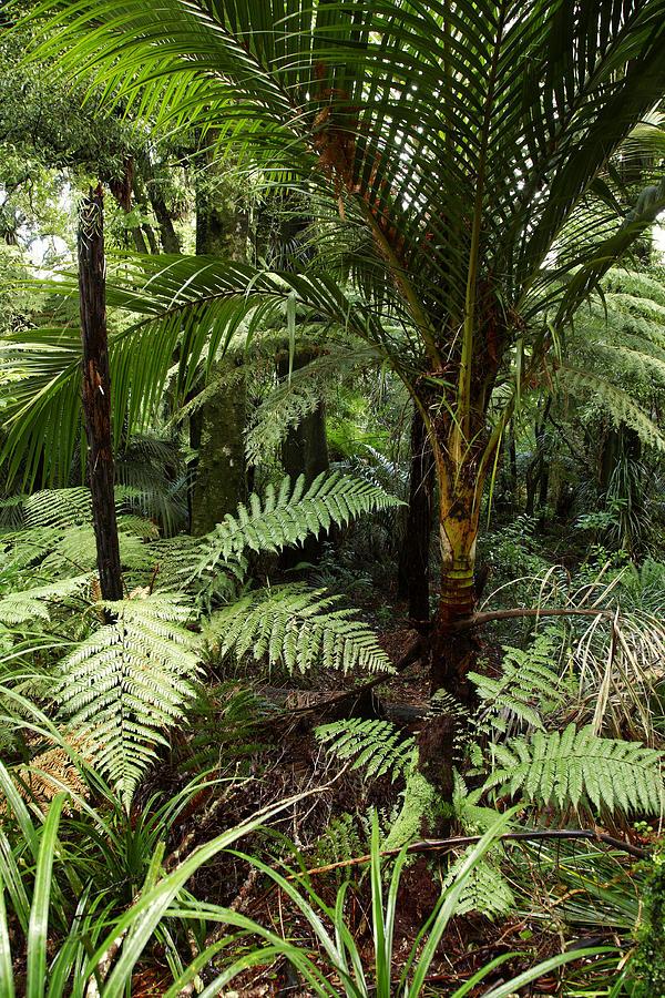 Dense Photograph - Jungle by Les Cunliffe