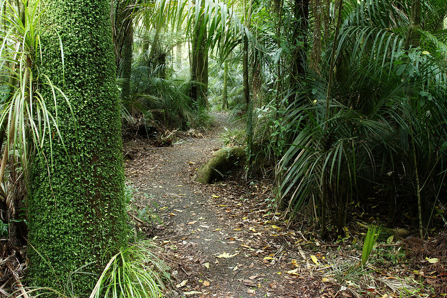 Forest Photograph - Tropical Forest by Les Cunliffe