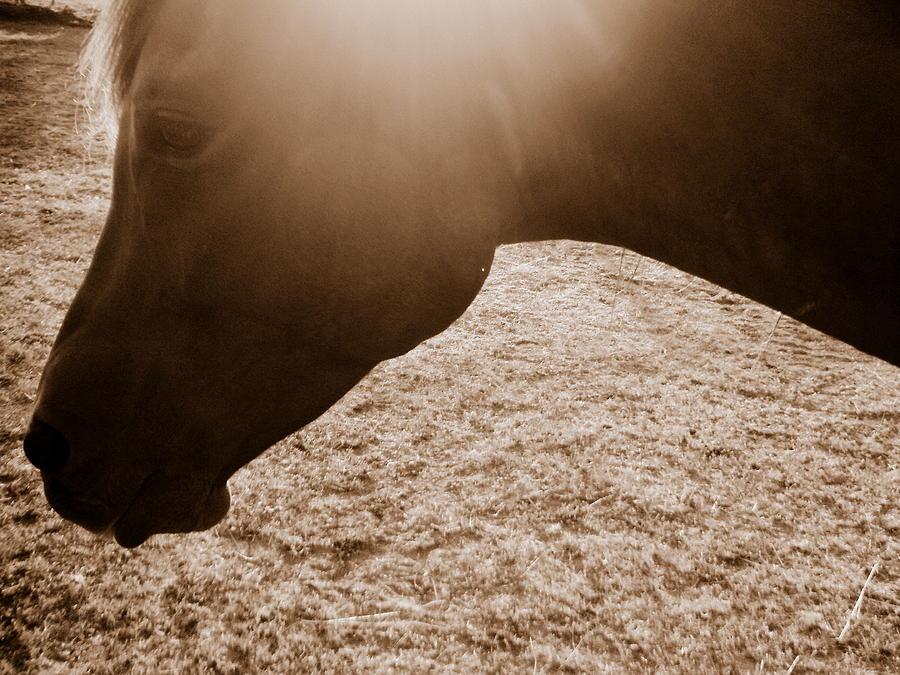 Horse Photograph - Untitled by Shaila Yovan Tenorio