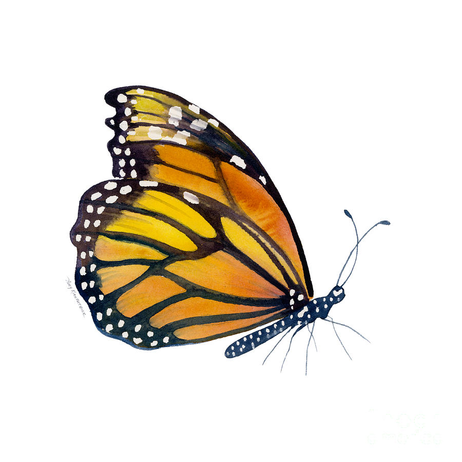 Monarch Butterfly Painting - 103 Perched Monarch Butterfly by Amy Kirkpatrick