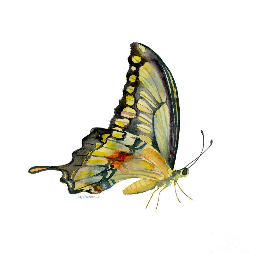 104 Perched Swallowtail Butterfly Painting