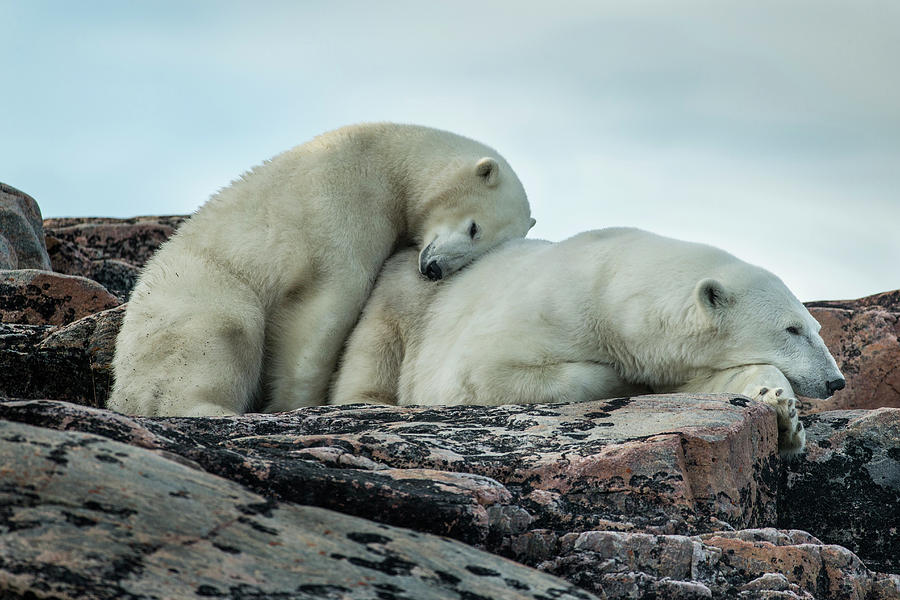 Affectionate Photograph - Canada, Nunavut Territory, Repulse Bay by Paul Souders