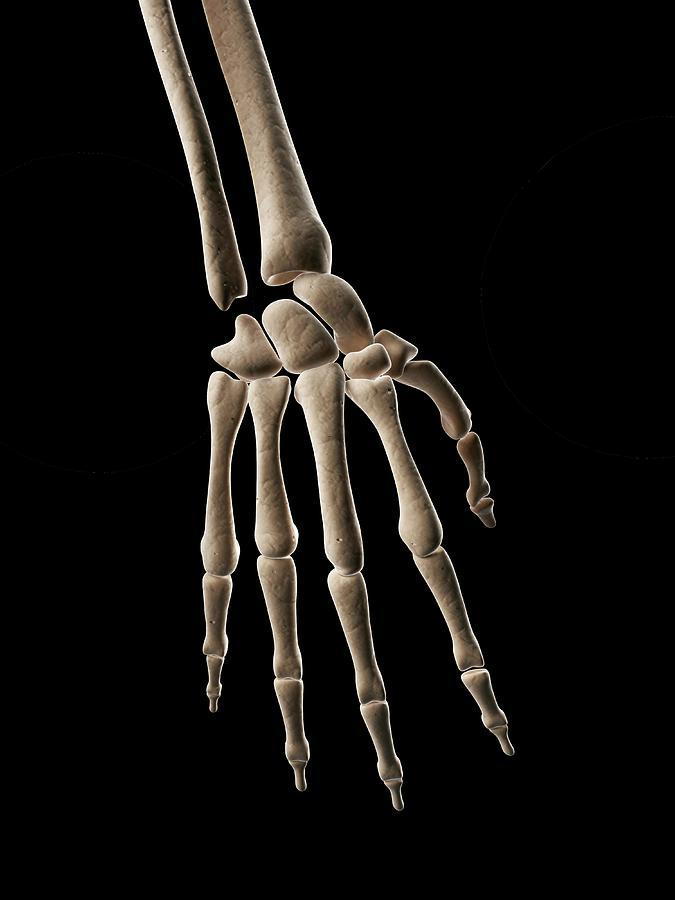 Human Hand Bones Photograph by Sebastian Kaulitzki