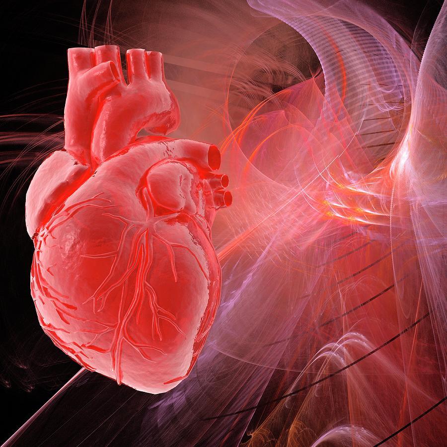 Human Heart, Artwork Digital Art by Laguna Design
