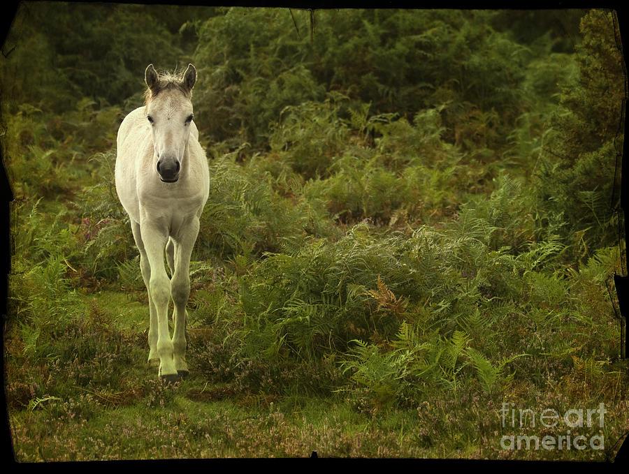 Pony Photograph - New Forest Pony by Angel  Tarantella