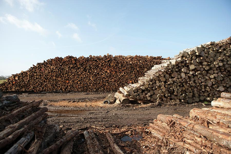 Nobody Photograph - Wood Chip Fuel Production by Lewis Houghton/science Photo Library