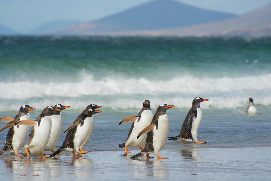 Beach Photograph - Falkland Islands by Inger Hogstrom
