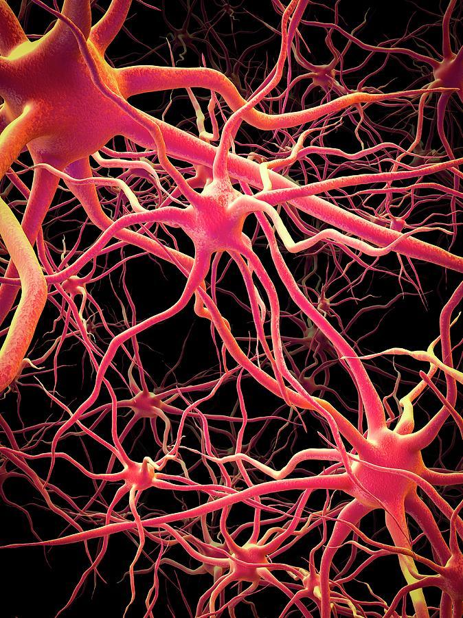 Neuron Photograph - Neural Network by Maurizio De Angelis