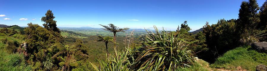 Bush Photograph - New Zealand by Les Cunliffe