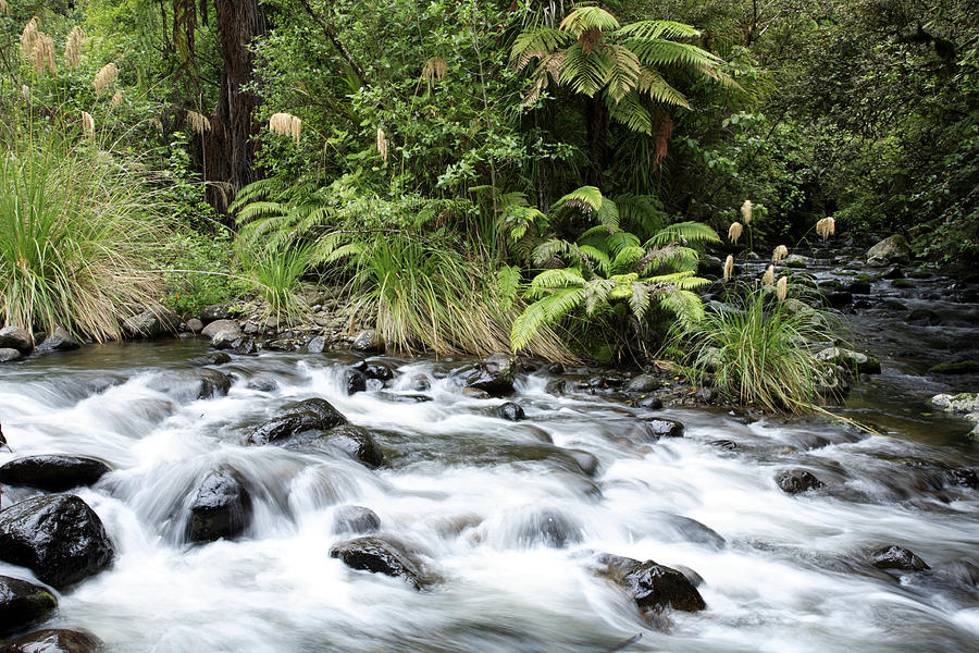 Water Photograph - Stream by Les Cunliffe