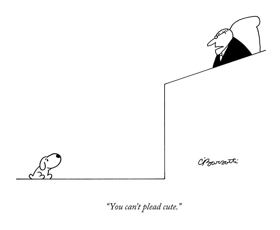 Dogs Drawing - You Cant Plead Cute by Charles Barsotti