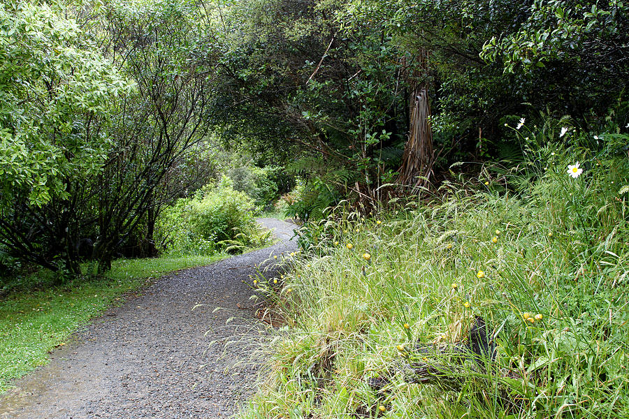 Spring Photograph - Forest Trail by Les Cunliffe