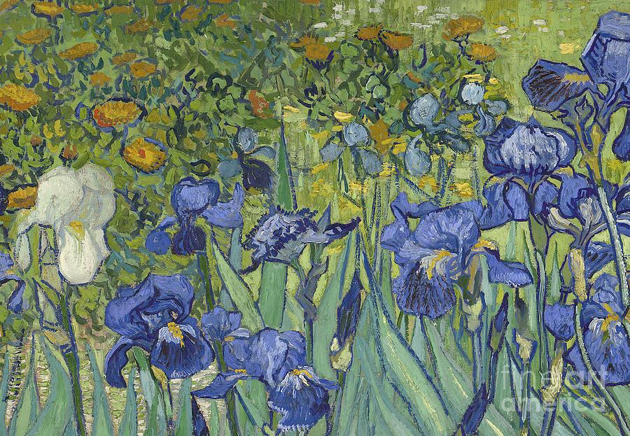 Irises Painting - Irises by Vincent Van Gogh