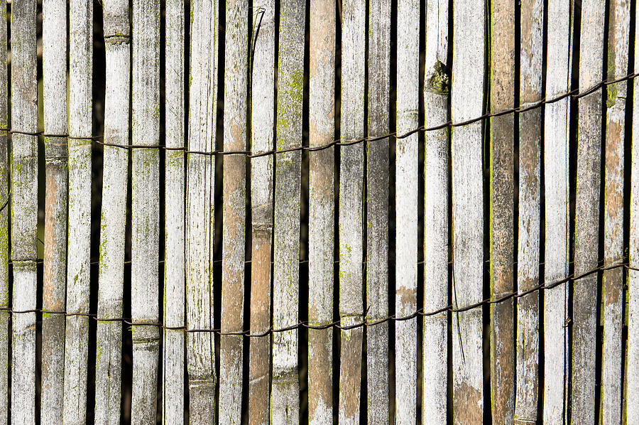 Abstract Photograph - Wood Background by Tom Gowanlock