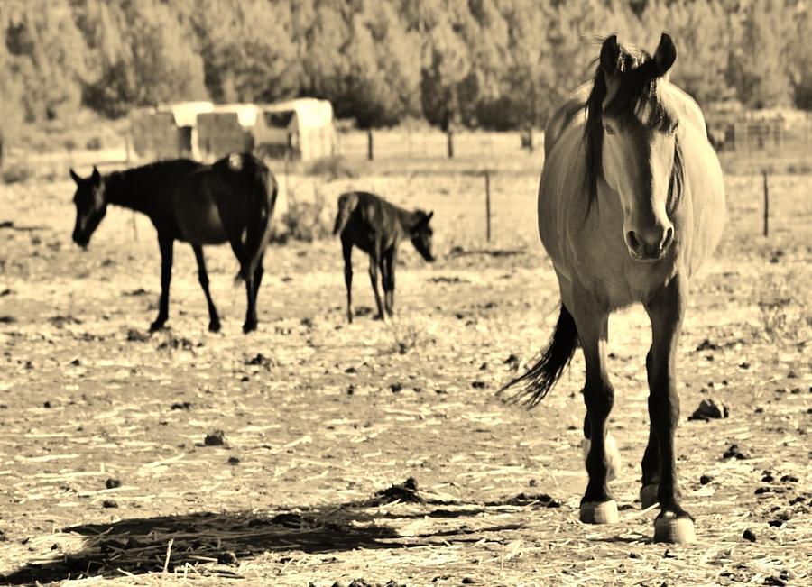 136 Digital Art by Wynema Ranch