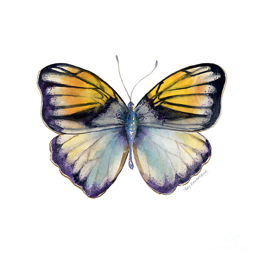 14 Pieridae Butterfly Painting