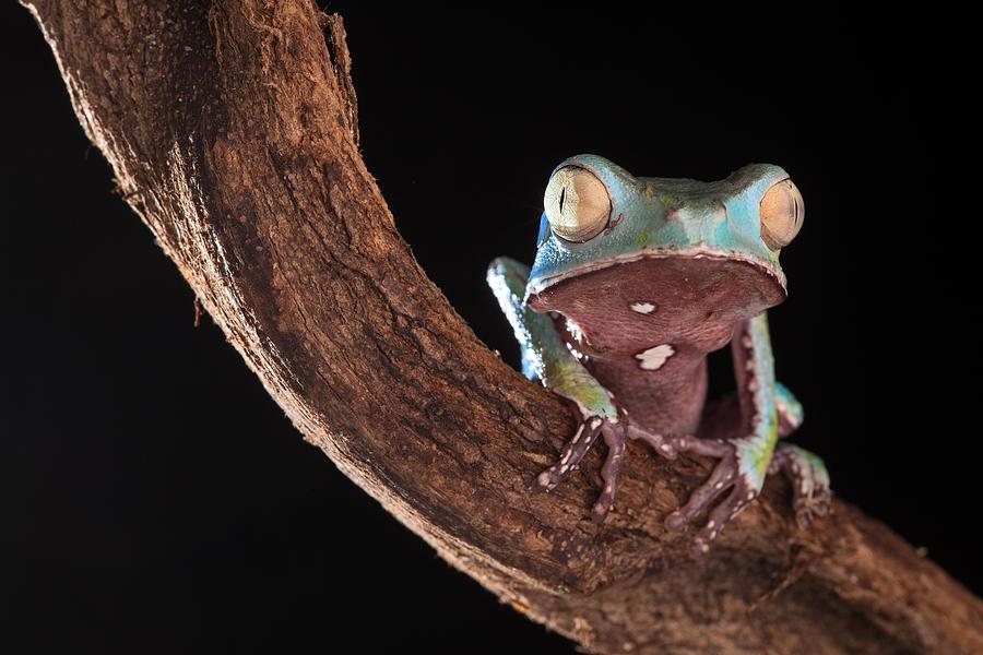 Tree Frog Photograph - Tree Frog by Dirk Ercken