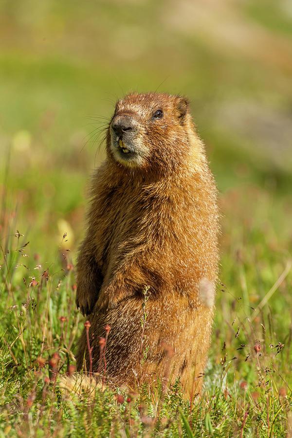 Animal Photograph - Usa, Colorado, San Juan Mountains by Jaynes Gallery