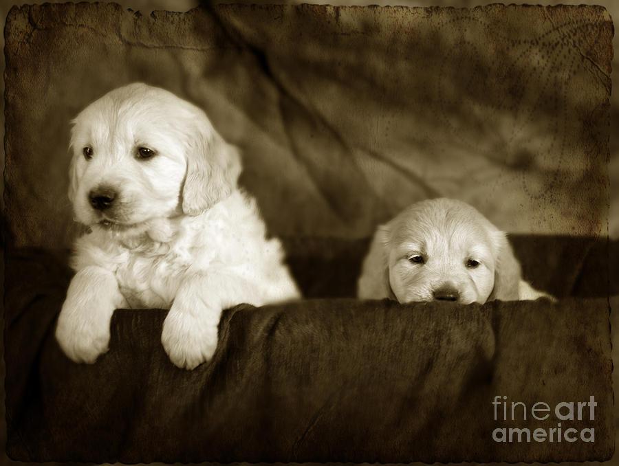 Dog Photograph - Vintage Festive Puppies by Angel  Tarantella