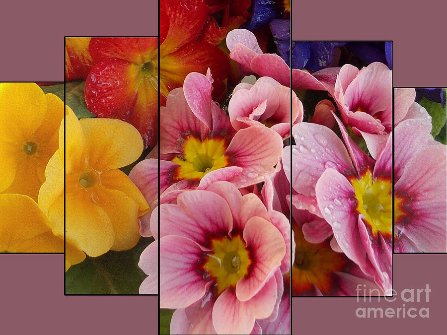 2013 Photograph - 1417-multicolor Spring Flowers by Elvira Ladocki