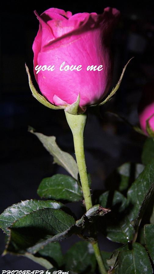 Photograph - Rose For You  by Gornganogphatchara Kalapun