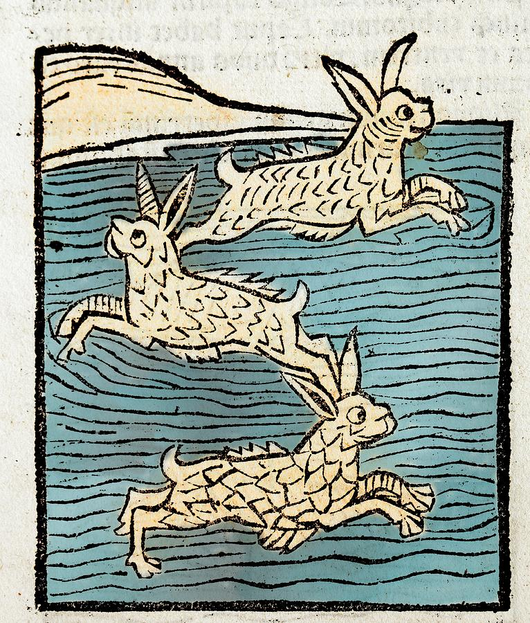 15th Century Photograph - 1491 Sea Hares From Hortus Sanitatis by Paul D Stewart