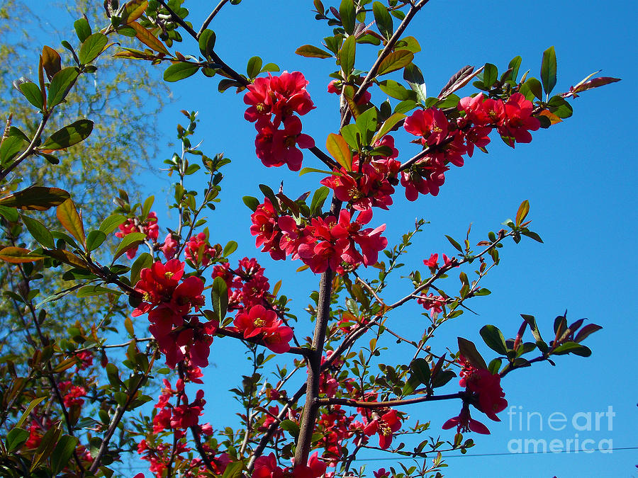 2013 Photograph - 1495-trees With The Flowers by Elvira Ladocki