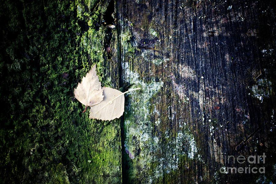 Birch Photograph - Autumn by Kati Finell