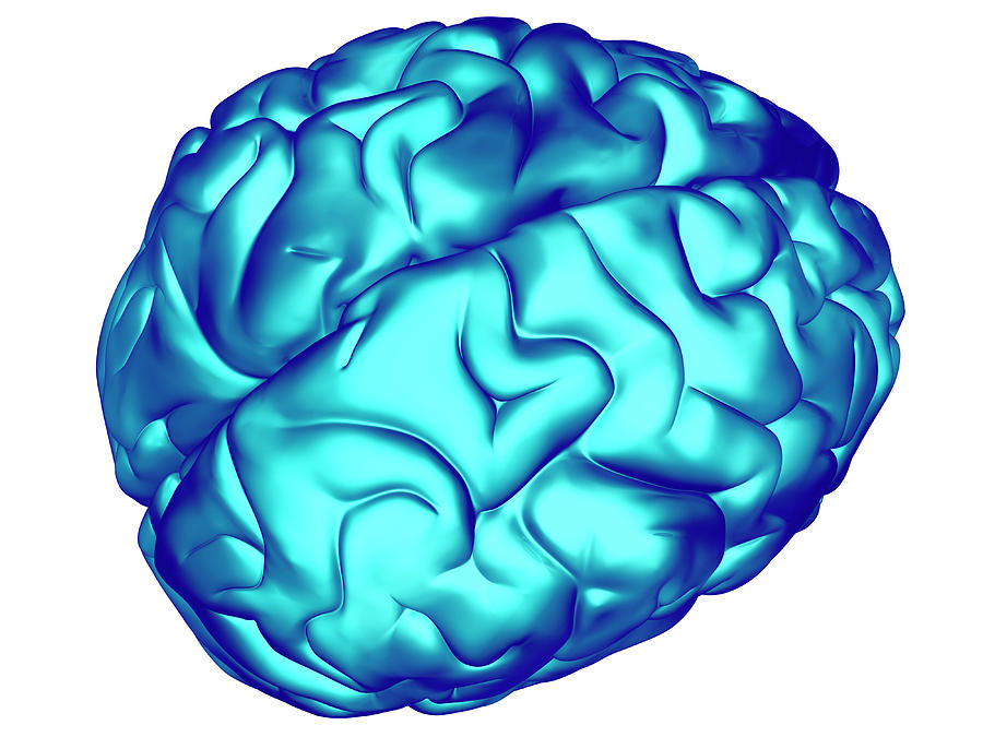 Brain Photograph - Brain by Pasieka