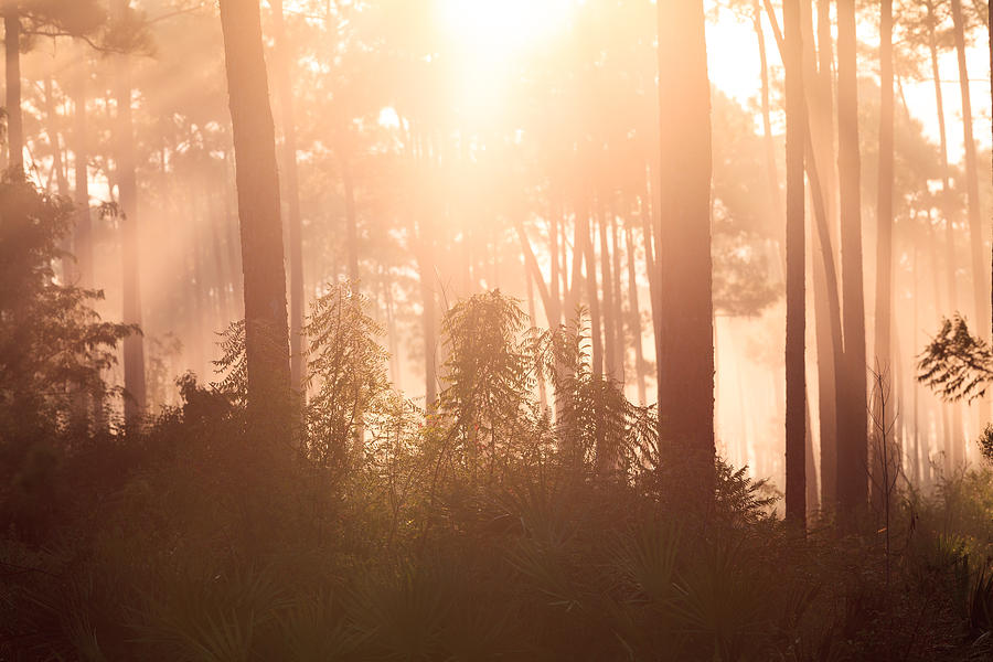 Everglades Photograph - Foggy Sunrise At Long Pine Key by Jonathan Gewirtz