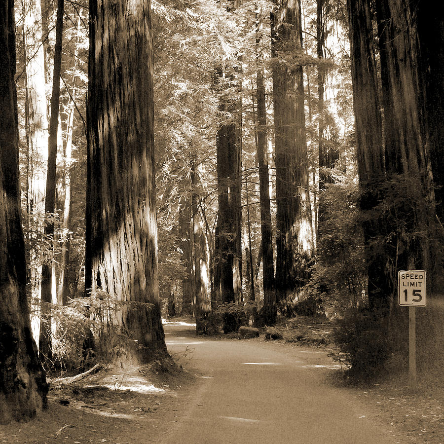 Forest Photograph - 15 Mph by Mike McGlothlen