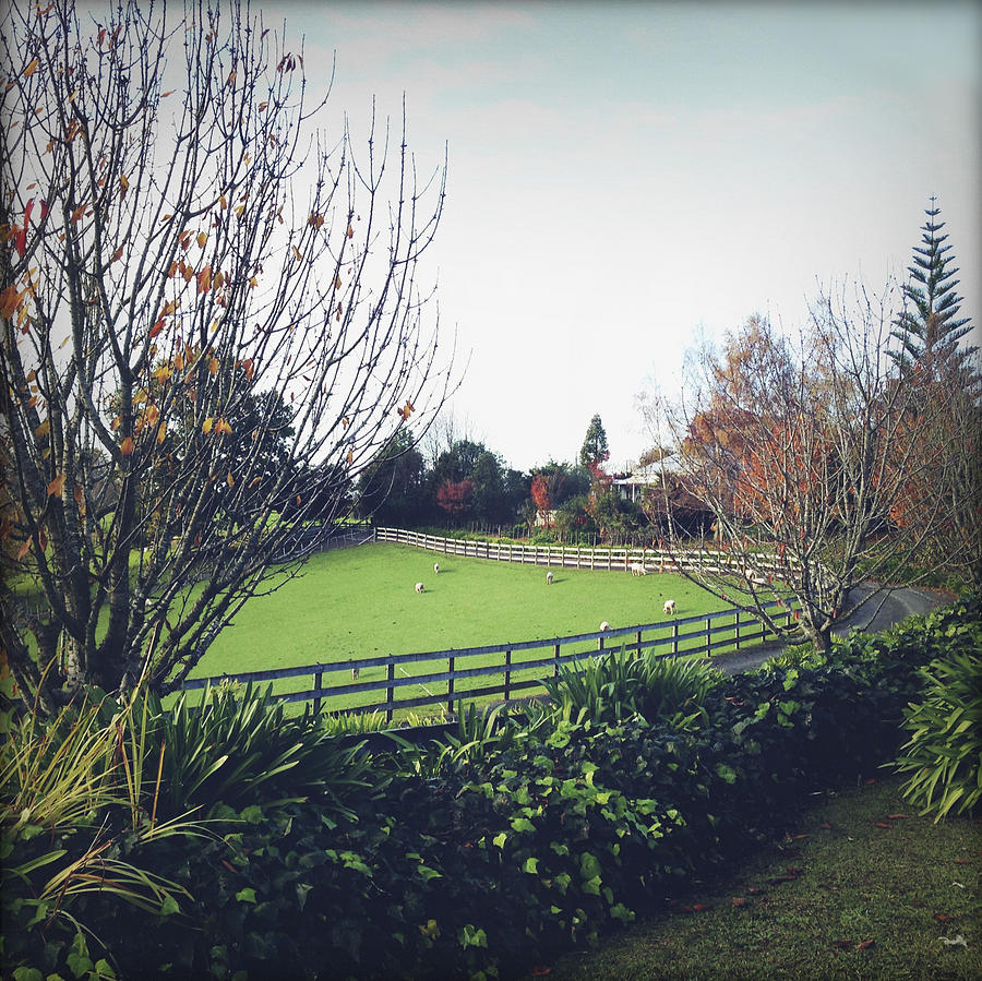 Ranch Photograph - New Zealand by Les Cunliffe