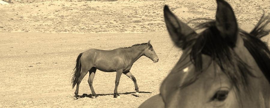 150 Digital Art by Wynema Ranch