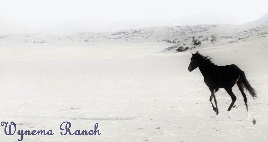 156 Digital Art by Wynema Ranch