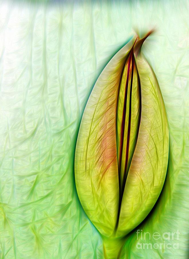 Tulip Digital Art - Tulip by Odon Czintos