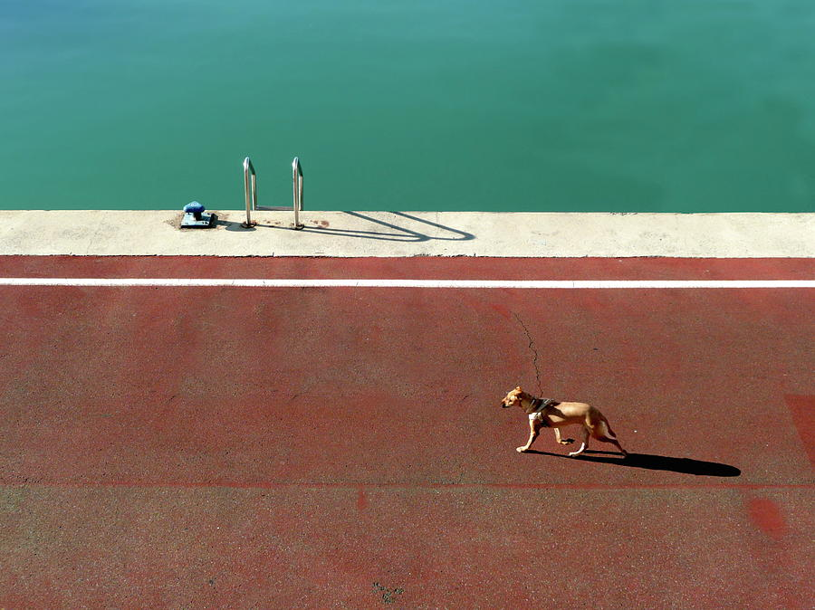 Dog Photograph - 165/15 by Paolo Luxardo