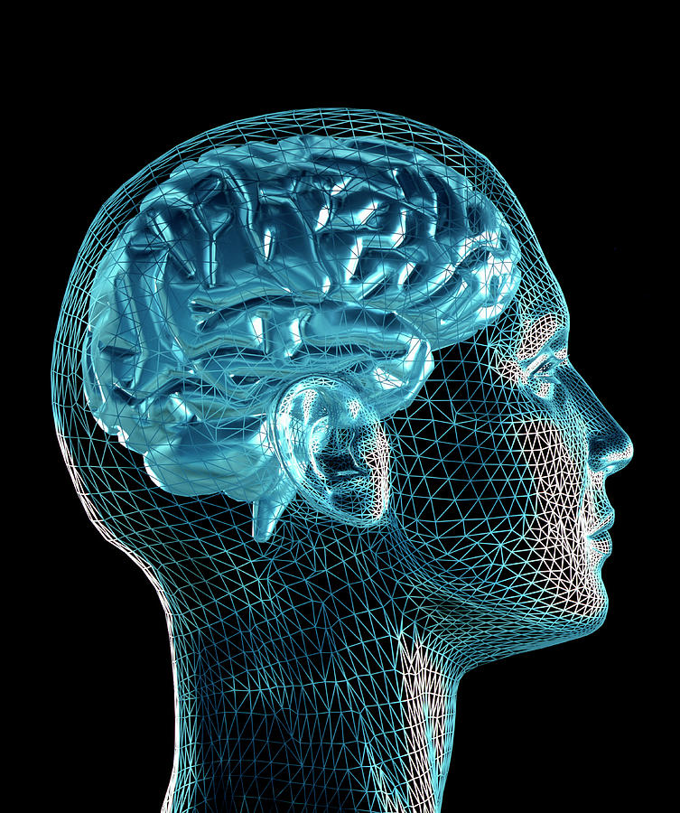 Monochrome Photograph - Brain by Pasieka