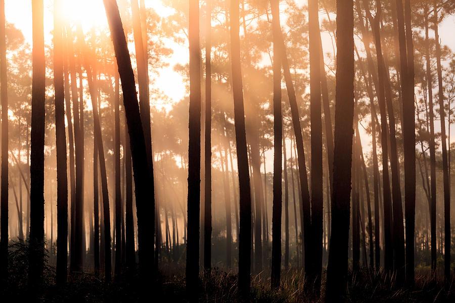 Dawn Photograph - Foggy Sunrise At Long Pine Key by Jonathan Gewirtz