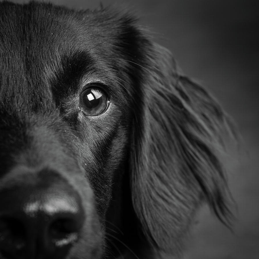 Horizontal Photograph - Portrait Of A Mixed Dog by Animal Images
