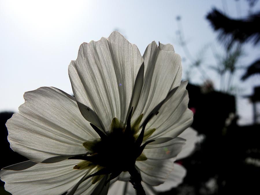 Flowers Photograph - Loveflowers by Baljit Chadha